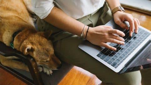 Nos animaux de compagnie nous apportent un certain bien-être au travail